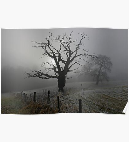 Trees in the fog Poster