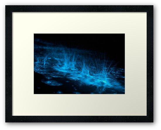 Bioluminescent Splashes by Phil Hart