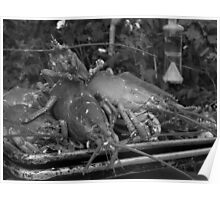 Lobsterscape - black and white Poster