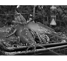 Lobsterscape - black and white Photographic Print