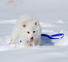 Sasha The Snow Puppy by KevinsView