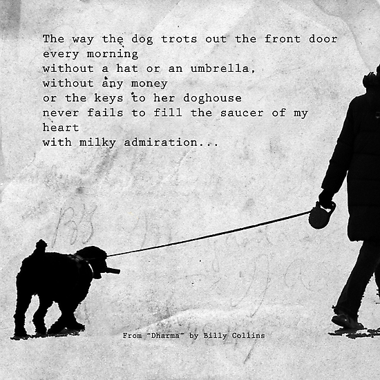 The Way a Dog Trots by Mary Ann Reilly