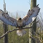 Ferruginous Hawk ~ It's Good!!!! by Kimberly Chadwick