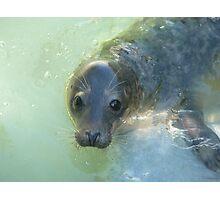 Cute Seal Photographic Print