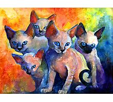 Devon Rex kittens Cat painting Svetlana Novikova Photographic Print
