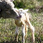 Mama and her Lamb by Kimberly Palmer