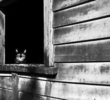 Sass sits waiting. by Lynne Haselden