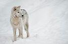 My Friends Call Me Snowball by Bill Maynard