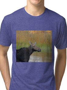 Maine Moose at dusk Tri-blend T-Shirt
