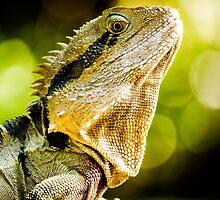 Eastern Water Dragon by Zac Harney
