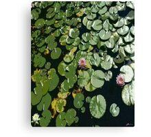 Lily Pond 1 Canvas Print