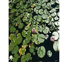 Lily Pond 1 Photographic Print