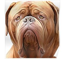 dogue de bordeaux ( french Mastiff) Poster