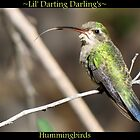 Lil' Darting Darling's ~ Hummingbirds by Kimberly Chadwick