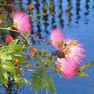 Pink Delight by Rosalie Scanlon