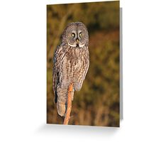 A strong gaze into the prairie fields  Greeting Card