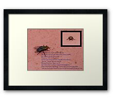 Fly with ruby red eyes Framed Print