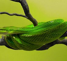 SNAKES : Green Mamba by AnnDixon