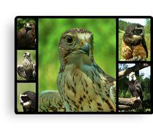 Birds of Prey Collage Canvas Print