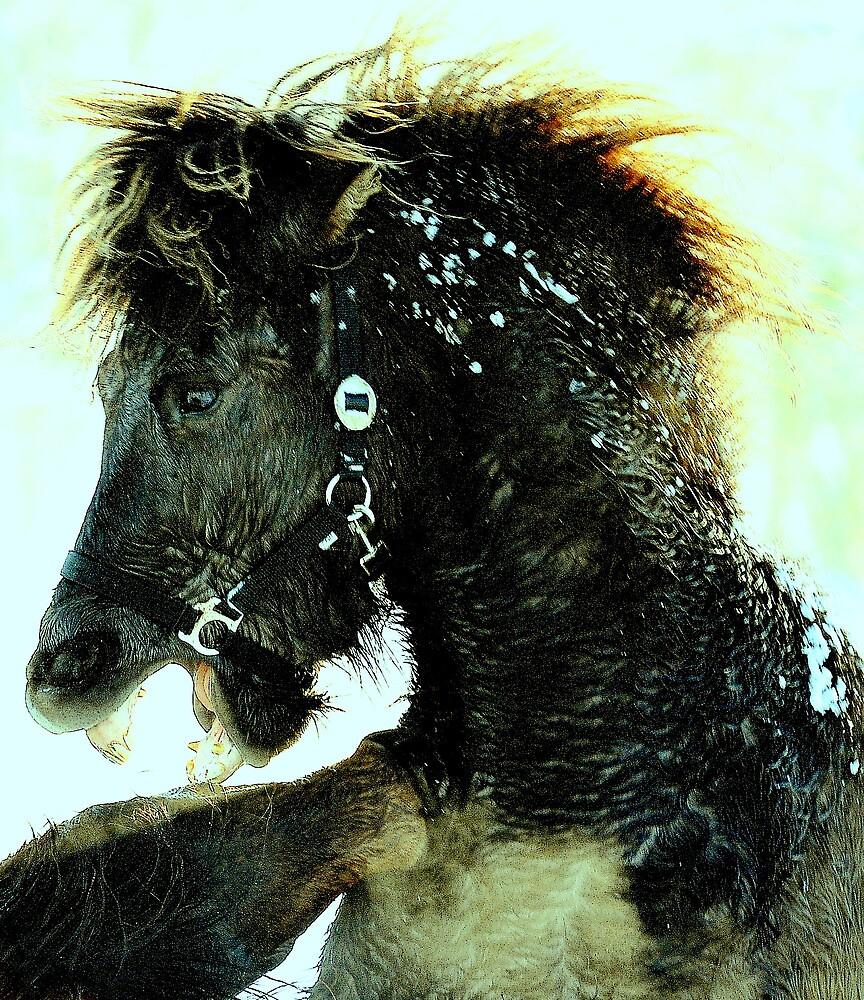 Fighting ponies by Alan Mattison