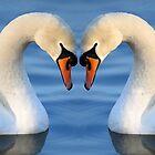 Swan Heart II by RedMann