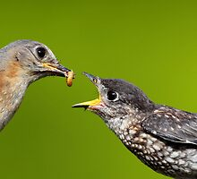 Time to feed the kid again by Rob Lavoie