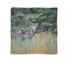 Moose in the meadow Scarf