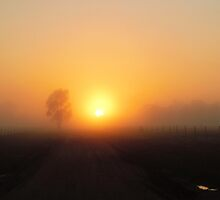 Sunrise in the fog by Julie Sleeman