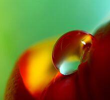 Tulip Drop by Sharon Johnstone