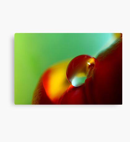 Tulip Drop Canvas Print