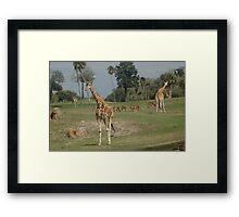 On the Plains Framed Print