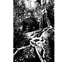 a tree that grows roots stands strong Photographic Print