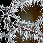 fragile garland by yvesrossetti