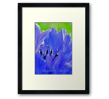 Bachelor's Button Blues Framed Print