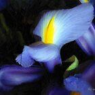 Purple Petal Plumes by RC deWinter