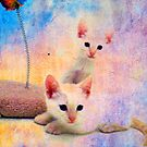 TWINS by Tammera