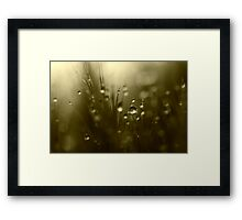 Twilight Hues Framed Print