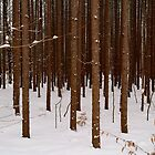 Quiet Snow in the Forest by BarbL