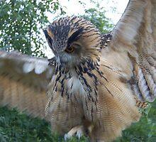 Big owl 2 by kelzere