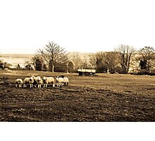 Rural Kent Photographic Print