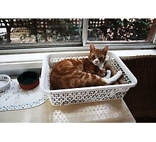 Basket Cat Photographic Print