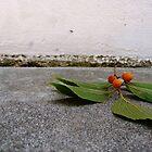 Berry by fourthangel