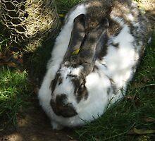 Big Bunny by kelzere