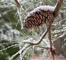 Snow In The Pines - Icy pinecone by Betty Northcutt