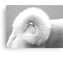 White Curl Canvas Print