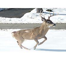 Running Buck Photographic Print