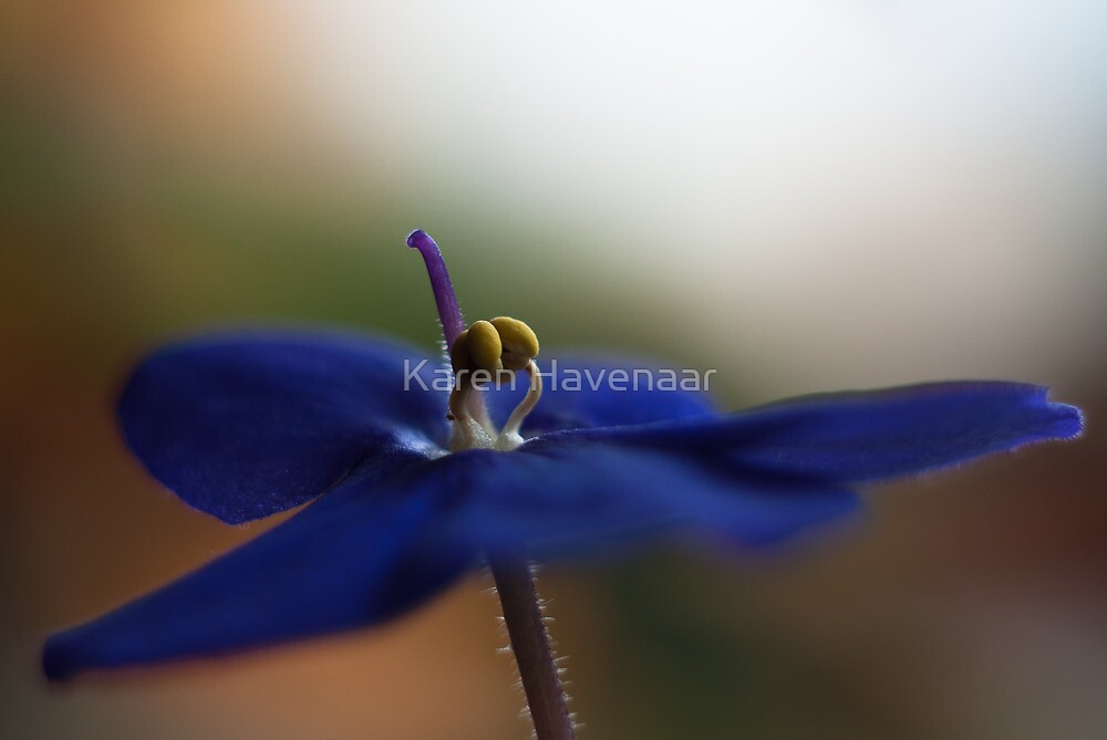Soft Cape Violet by Karen Havenaar