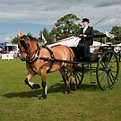 Ashbourne Show by Elaine123