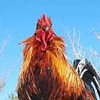 Rooster by SusieG