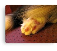 FURRY FOOT Canvas Print